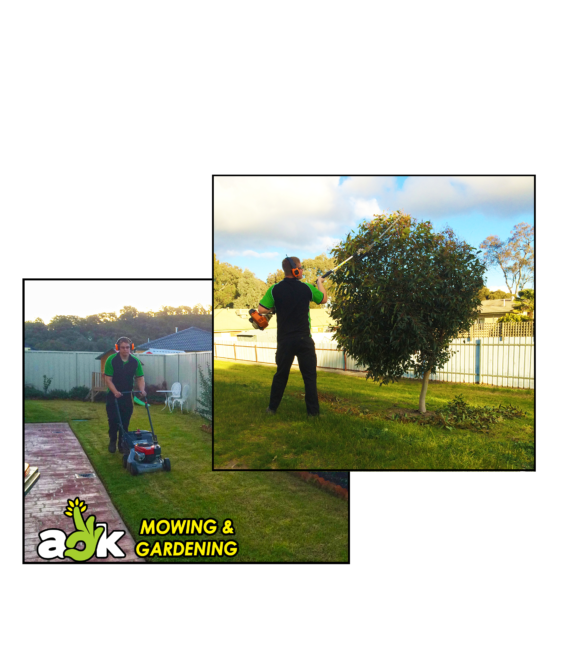 https://aokmowing.com.au/wp-content/uploads/2018/02/aok-mowing-hedging-collage-ipswich-qld-redbank-plains-585x652.png